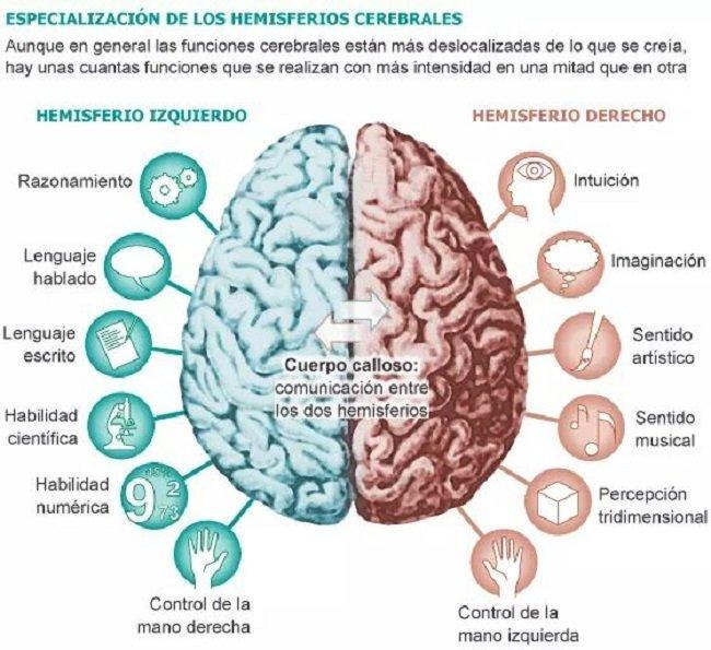 Multitarea y los hemisferios cerebrales