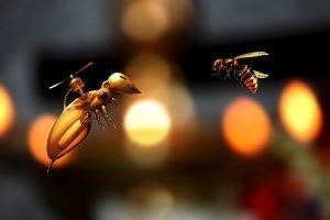 Robot abeja vs abeja real