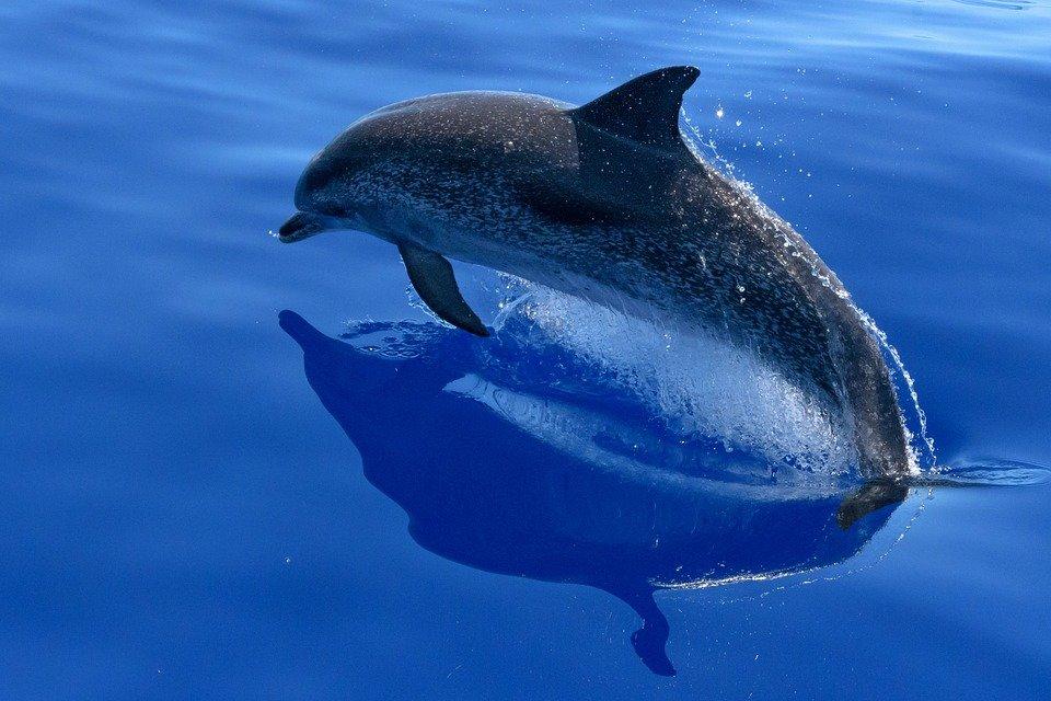 Cronotipo delfín