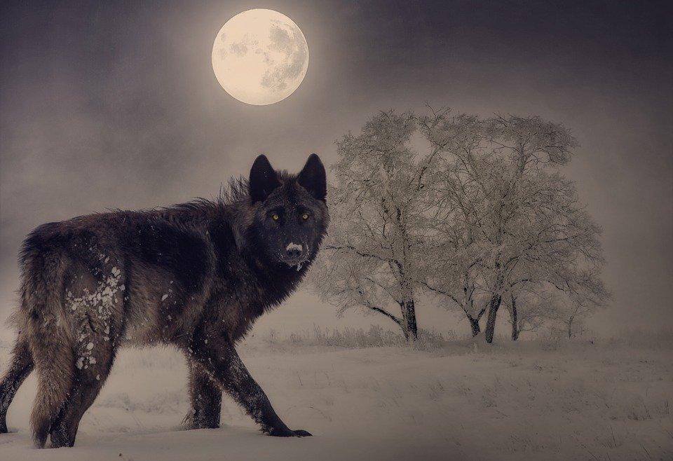 Cronotipo lobo