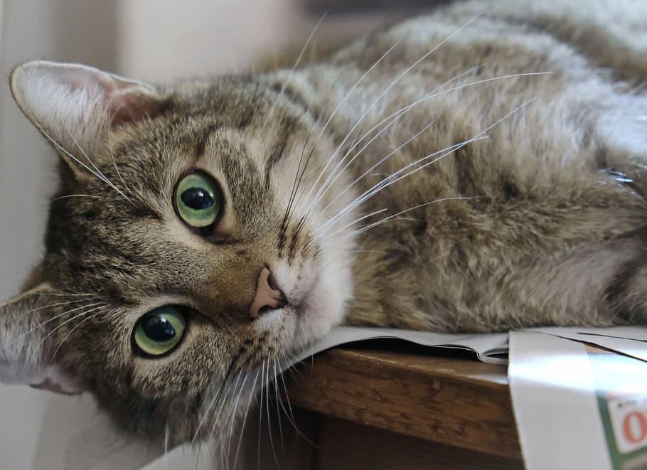 Gato cansado - ¿Sientes que estás siendo poco productivo?