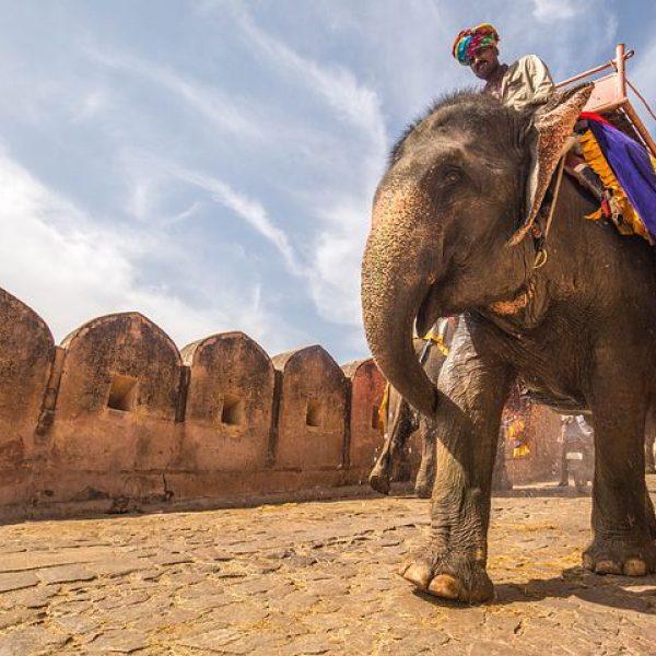 Elefante y jinete
