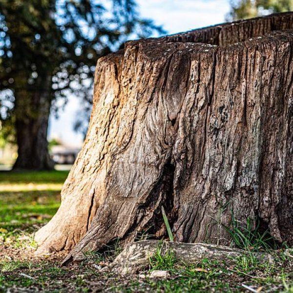 Un tocón de un árbol