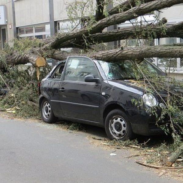 Árbol caído en coches